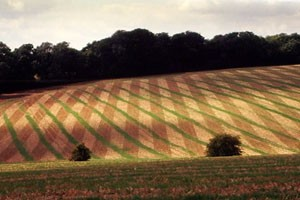 Field Patterns, Warren Barn, Gumber