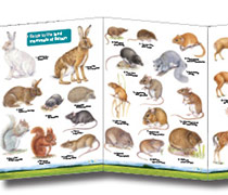 Field Guide - Land Mammals