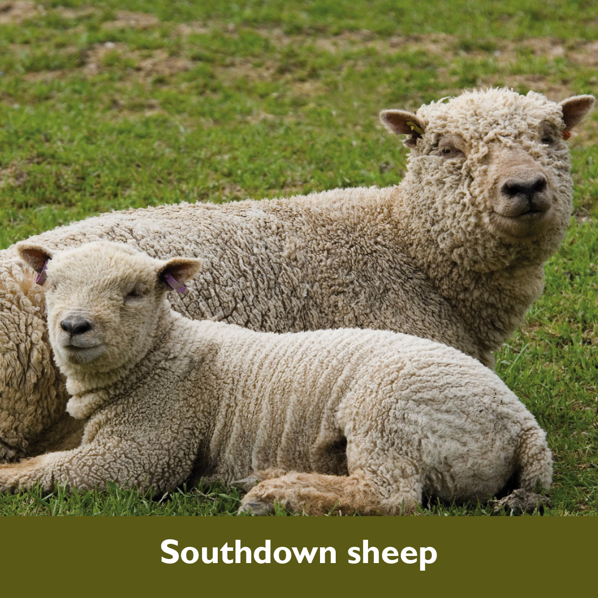 South Downs Species – Learning Zone